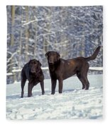 Chocolate Labrador Retrievers Fleece Blanket