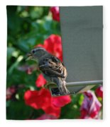 Chow Time At The Bird Feeder Fleece Blanket