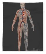 Circulatory System In Female Anatomy Fleece Blanket