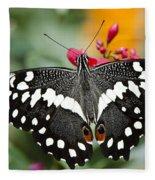 Citrus Swallowtail Butterfly  Fleece Blanket