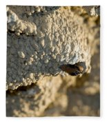 Cliff Swallow About To Fledge Fleece Blanket