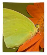 Cloudless Sulphur Butterfly Fleece Blanket