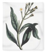 Clove Eugenia Aromatica Fleece Blanket