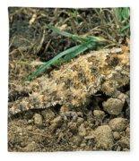 Coast Horned Lizard Fleece Blanket