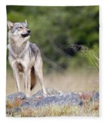 Coastal Wolf Fleece Blanket