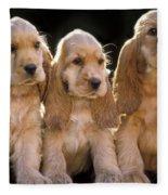 Cocker Spaniel Puppies Fleece Blanket