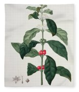 Coffea Arabica From Phytographie Fleece Blanket