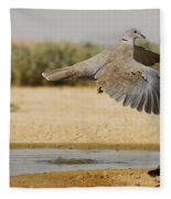 Collared Dove  Fleece Blanket