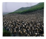 Colony Of Royal Penguin Eudyptes Fleece Blanket