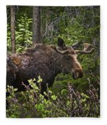 Colorado Moose Fleece Blanket