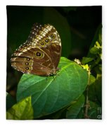 Common Blue Morpho Moth Fleece Blanket
