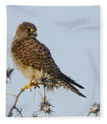 Common Kestrel Falco Tinnunculus 3 Fleece Blanket