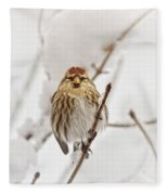 Common Redpoll Fleece Blanket