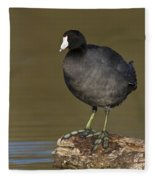 Coot On A Log Fleece Blanket
