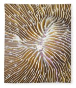 Coral Closeup Fleece Blanket