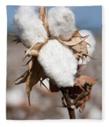 Cotton Bolls  Fleece Blanket
