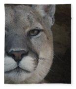 Cougar Digitally Enhanced Fleece Blanket