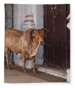 Cow At Church At Colva Fleece Blanket