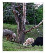 Cows Of Color Fleece Blanket