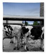 Cows Peek A Boo Fleece Blanket