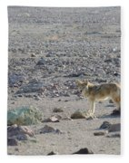 Coyote In Death Valley National Park -a Fleece Blanket