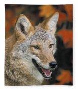 Coyote In Maple Fleece Blanket