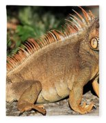 Cozumel Iguana Vacation Fleece Blanket