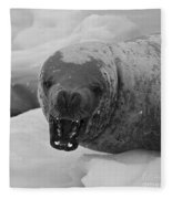 Crabeater Seal.. Fleece Blanket