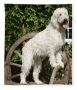 Cream Labradoodle On Wooden Chair Fleece Blanket