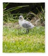 Crested Tern Chick - Montague Island - Australia Fleece Blanket