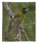 Crimson-collared Grosbeak Fleece Blanket