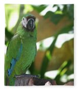 Curacao Parrot Fleece Blanket