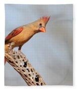 Curious Cardinal Fleece Blanket