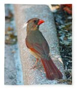 Curious Cardinal Fleece Blanket