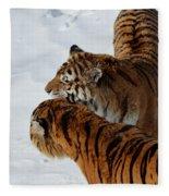 Curious Cats Fleece Blanket