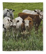 Curious Cows Fleece Blanket