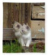 Curious Kittens Fleece Blanket