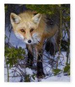 Curious Red Fox Fleece Blanket