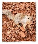 Curious Squirrel 2 Fleece Blanket