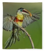 Curl-crested Aracari About To Perch Fleece Blanket