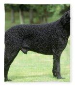 Curly-coated Retriever Fleece Blanket