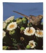 Curve-billed Thrasher Toxostoma Fleece Blanket