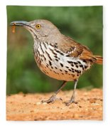 Curvedbill Thrasher With Grub Fleece Blanket