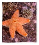 Cushion Winged Sea Star Fleece Blanket