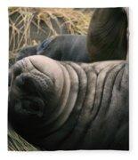 Cute Seal Fleece Blanket