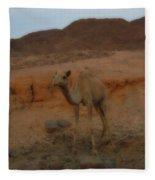 Cute Young Camel Desert Sinai Egypt Fleece Blanket