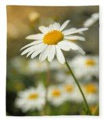 Daisies ... Again - Original Fleece Blanket