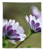 Daisies Seeking The Sunlight Fleece Blanket
