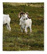 Dall Rams On Alert Fleece Blanket