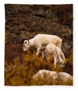 Dall Sheep Grazing Fleece Blanket